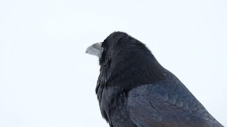 【ブラック】黒色のコインケース人気・おすすめ15選|定番中の定番カラー