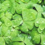 【グリーン】緑色のコインケース人気・おすすめ9選【メンズ】